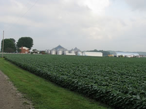 Indiana soybean farm