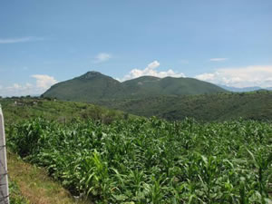 Local Crops at Cerro Jumil