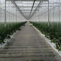 EnWave Royalty Partner Opens REV Dried Wasabi Market post image